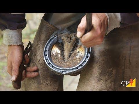 Curso a Distância Aparação de Cascos, Correção de Aprumos e Ferrageamento de Cavalos
