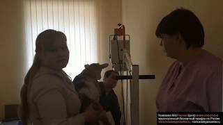 Обучение работе с цифровым рентгеном на Всеволожской СББЖ Ленинградской области