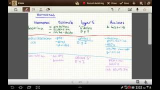 Hormonas que actuan en el sistema digestivo
