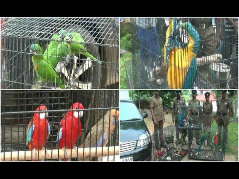 A racket of selling hundreds of valuable birds - 19-11-2017