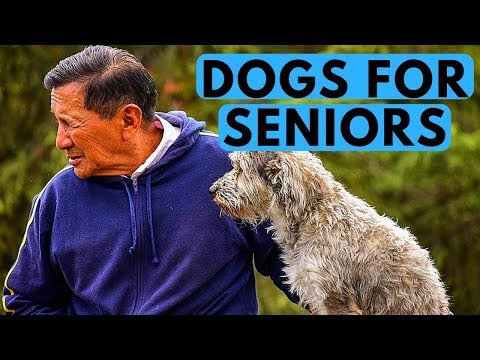 top-10-best-dogs-for-seniors