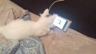 Котёнок смотрит мультик (Ну погоди!)
