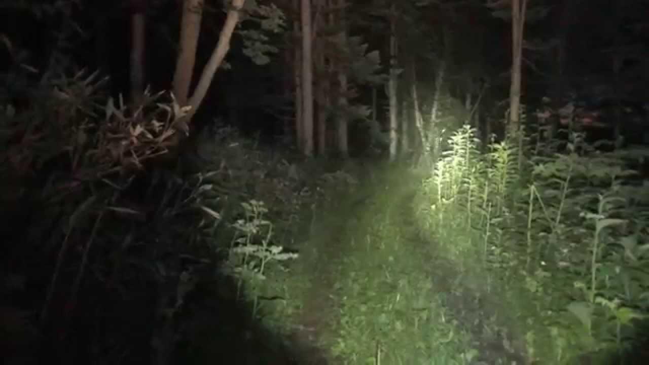Armytek Wizard Pro XML2-S6 Hi-CRI in the forest