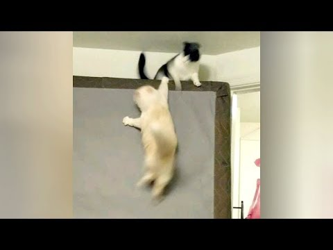 It's time for you to LAUGH! Watch FUNNIEST ANIMALS HERE!