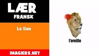 Lær fransk = Le lion