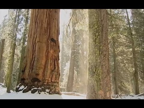 """America's National Forests"" (2005)"