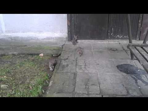 Funny Kittens Playing Jumping Scratching and a Mother Cat Part 3