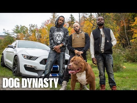 World's Biggest Pitbull Hulk Stars In Rap Video | DOG DYNASTY