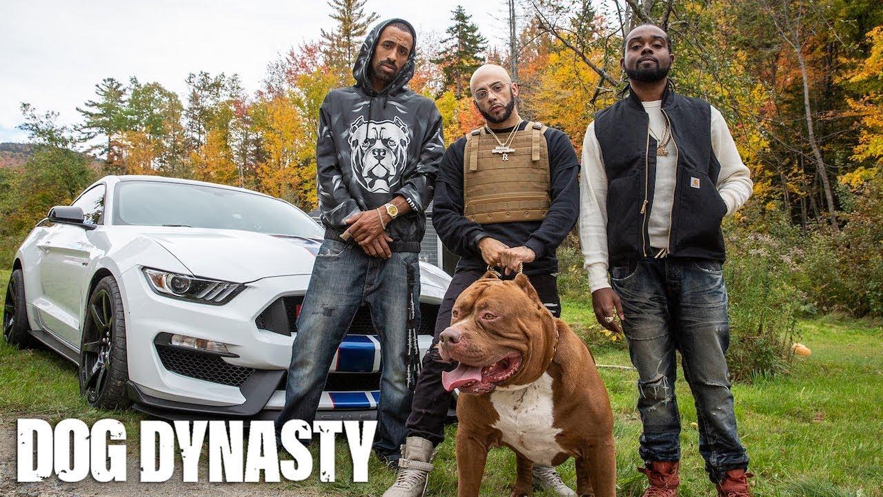 world-s-biggest-pitbull-hulk-stars-in-rap-video-dog-dynasty