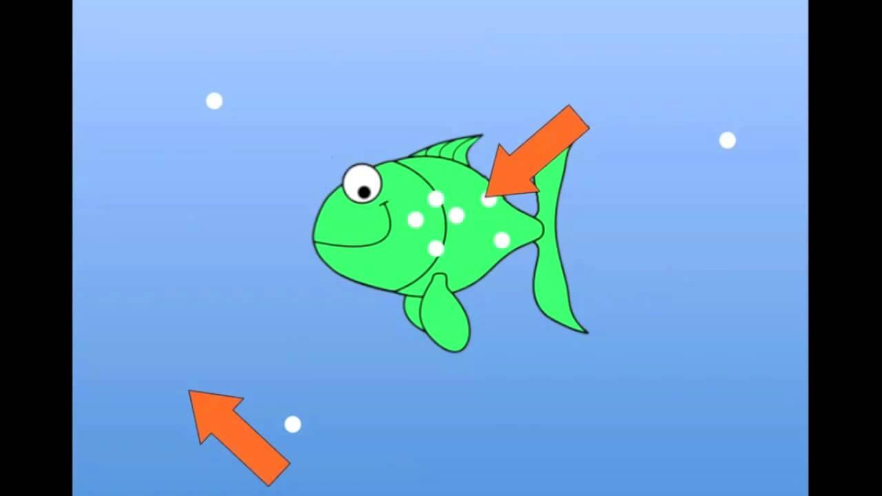 Freshwater fish hypertonic - 20 Second Story Of Osmosis Freshwater Fish