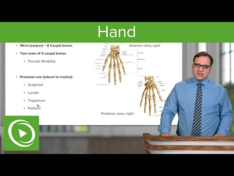 Hand – Anatomy | Medical Education Videos