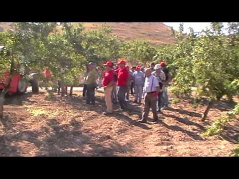 Agromelca - Recolección de almendras con el nuevo recolector trasero VT