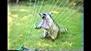 BEST FUNNY ANIMALS COMPILATION 2013 2014 Лучшая нарезка видео с животными