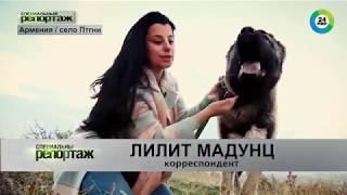 Гампр – сокровище Армении