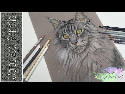 Pastel I Cat Portrait I Victoria Randall Fine Art