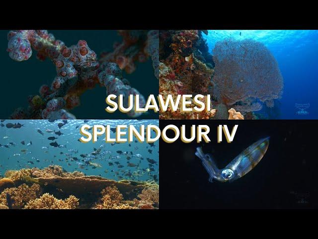 Sulawesi Splendour IV
