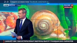 Крым станет родиной для креветок