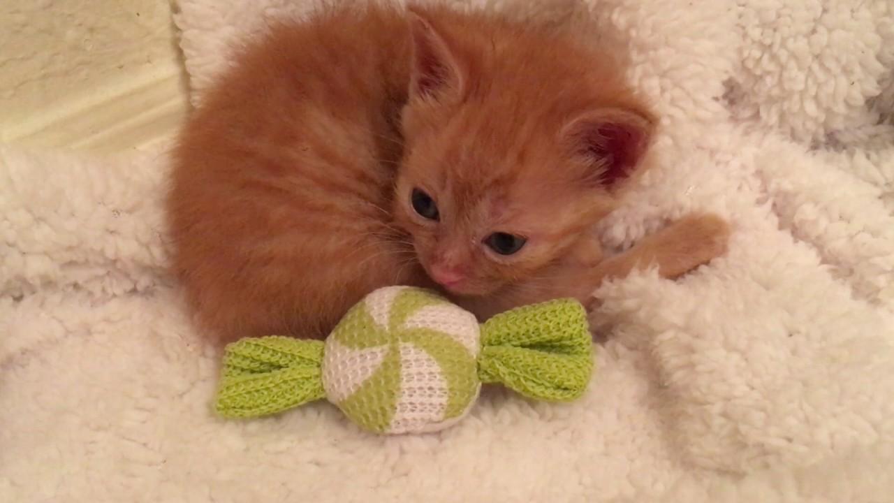 Bergan Turbo Scratcher Cat Toy Youtube