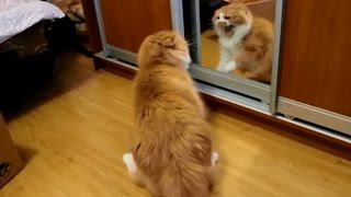 Cats VS Mirrors Compilation