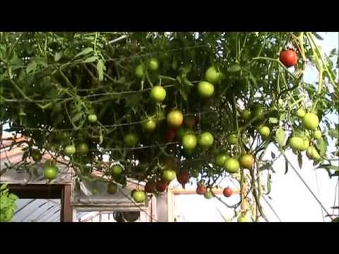 amazing vegetable on hydroponic farming system 5