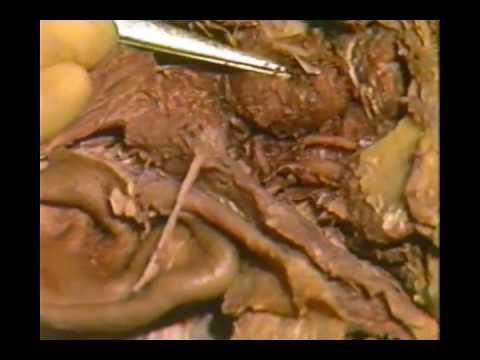 Human Anatomy - Head and Neck - YouTube