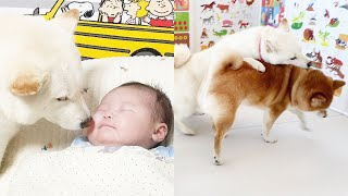 Dog Changes in Front of Baby