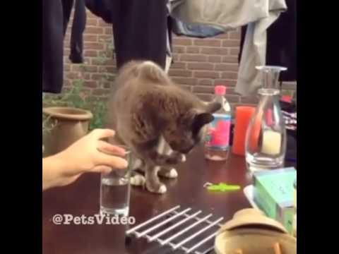 Кот в стакане видео