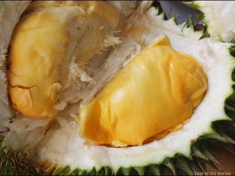 Durian Addiction is Real. Getting High in Malaysia.