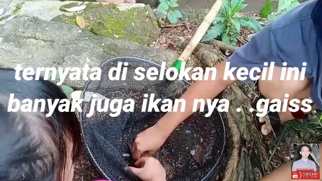 IKAN KECIL DI SELOKAN PINGGIRAN JALAN RAYA   #VLOG hunting ...