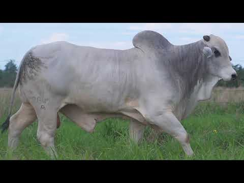 LOTE 028   GPO A 2647