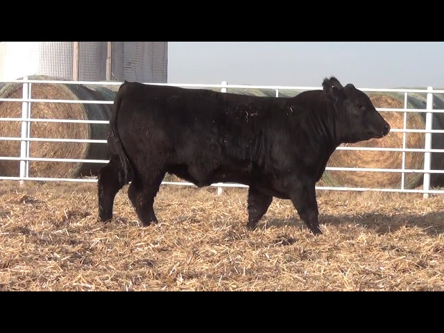Express Ranches Lot 173