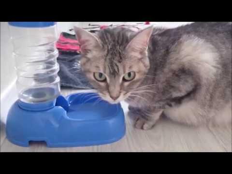 Смешная подборка про кошек и котов. Смешное видео. Видео
