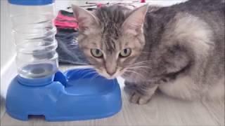 #984 Видео от Нины Как дела у кошек Сквика поправляйся