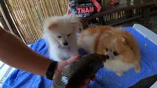 Семейных отдых на озере в Сочи (Адлер). Собаки остались довольны!