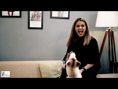 My Pet My Story - Aanal Savaliya - By Just Dogs| Makeup Artist