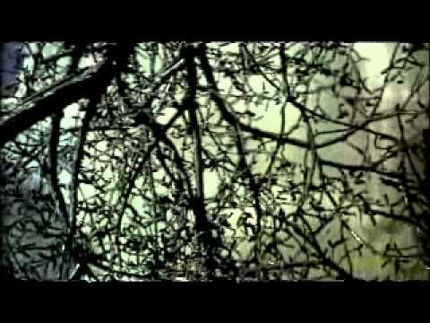 Mark Templeton - Tentative Growth