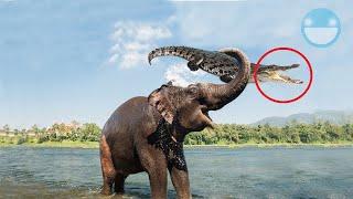 5 Madres Animales Salvando a sus Hijos de Manera Increíble que si no Graban Nadie Creería