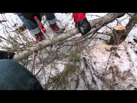 The Hunt for the Christmas Tree
