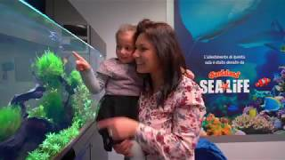 Gardaland SEA LIFE Erstellen Hospital ''Aquairum-Therapie'' Bereich auf P. Pederzoli Klinik