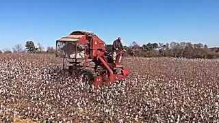 Cotton Picking - Bodine Farms