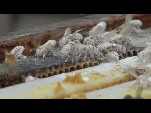 Honey Bee Apiary Official Bee-Hive inspection by the PA Dept  of Ag Varroa Destructor Test
