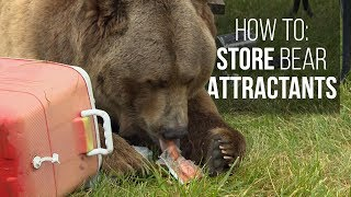 What Attracts a Bear? How to Store Attractants in Grizzly Bear Country