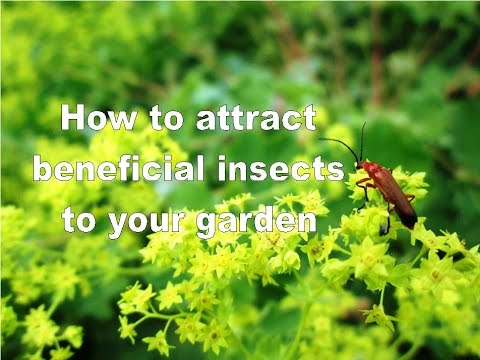 Image result for Your Garden's 'Most Wanted' Beneficial Insects