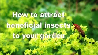 Attracting Beneficial Insects using Flower Borders