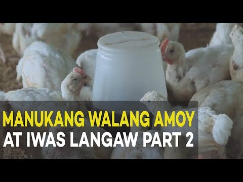 Manukang Walang Amoy at Iwas Langaw Part 2 : Housing Construction | Agribusiness