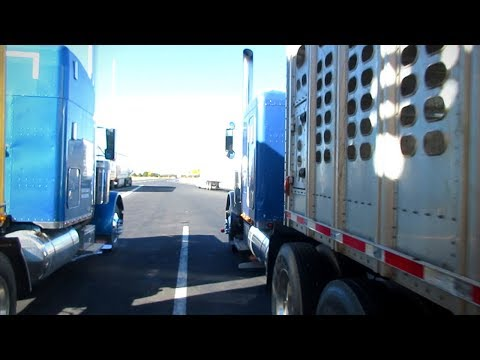 HAULING Spider Monkey to NFR 2017