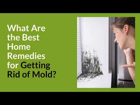 What Are the Best Home Remedies for Getting Rid of Mold?
