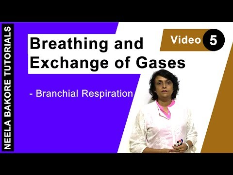 Breathing And Exchange Of Gases - Branchial Respiration