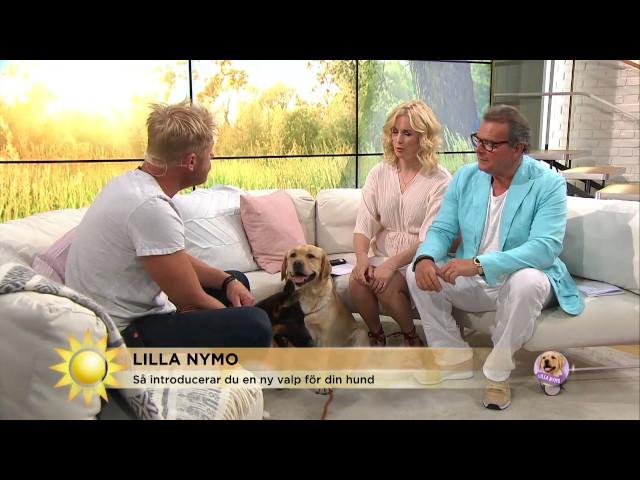 Lilla Nymo har fått en lillebror - här är Leif - Nyhetsmorgon (TV4)