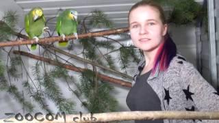 Кстати о птичках!(Наконец-то собрались сделать видео о наших птицах. Попугаи, туканы. Познакомьтесь с нашим птичником :) За..., 2017-03-04T23:28:45.000Z)
